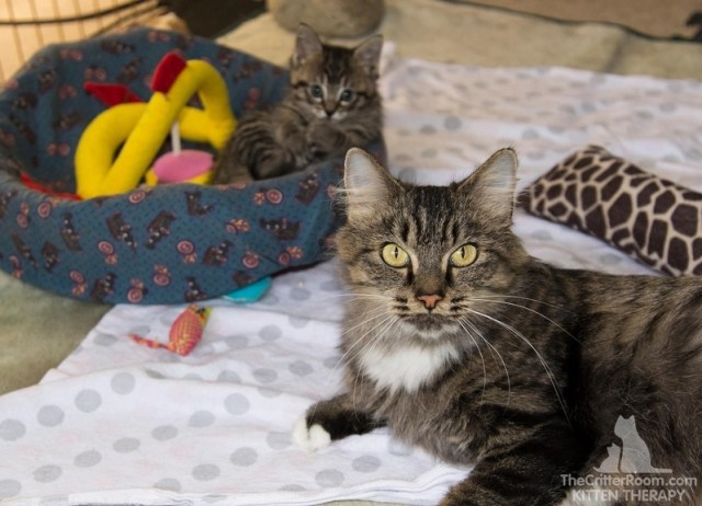 Котёнок родился на 4 дня позже всего выводка – мама так и осталась для крохи самым близким существом