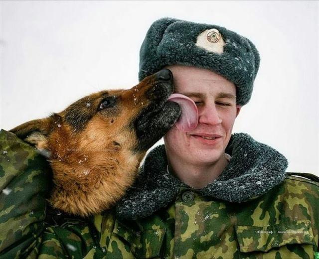 22 фото о трудностях жизни с немецкой овчаркой