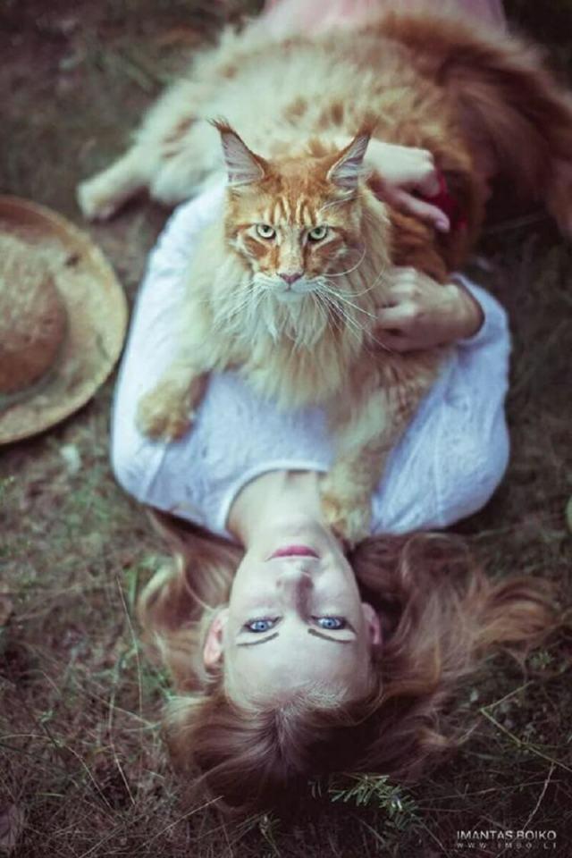Огромные мейн-куны, по сравнению с которыми обычные кошки выглядят совсем мелко