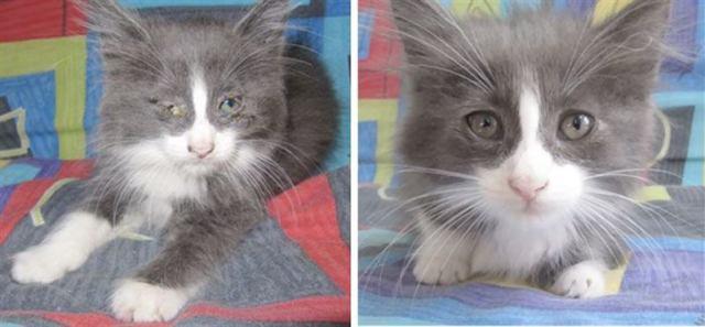 Твори добро: 25 кошек, до и после того, как их подобрали с улицы