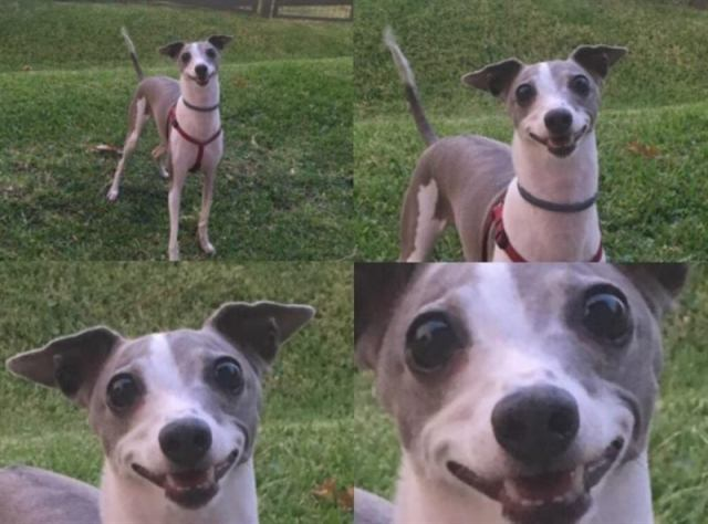 20 фотографий собак, после просмотра которых хочется сказать: «Кажется, ваш пёс сломался, несите нового!»