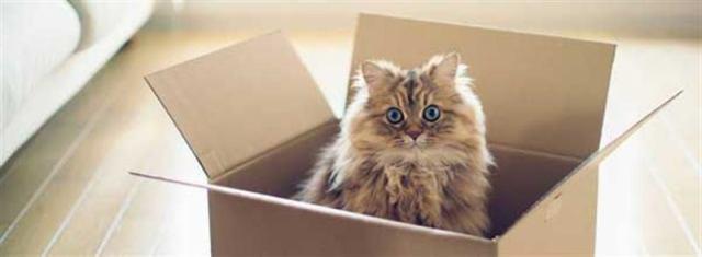 Кошки, которые подобрали себе коробку не по размеру, но им все равно!