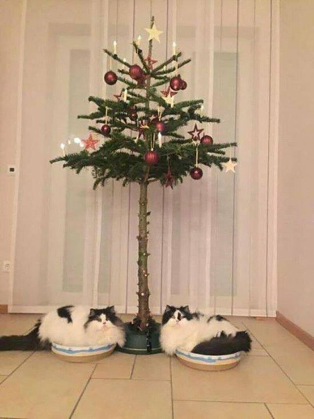 Котики, которые умеют любить жизнь