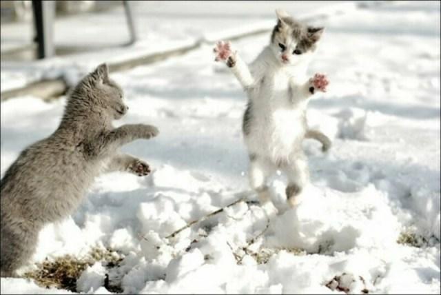 Смешные котики, столкнувшиеся со снегом