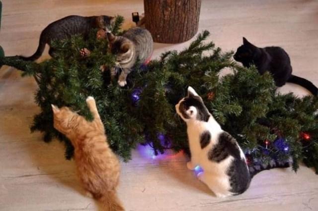Новогодний ёлкопад, или как веселятся кошки в праздники