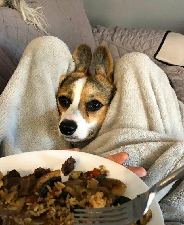 Собаки беззаветно жаждущие вкусняшку