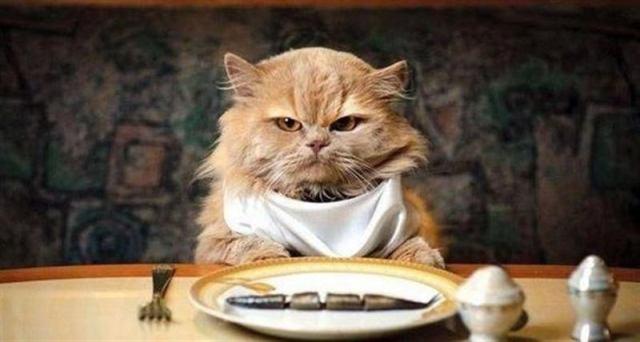 Хитрости и советы для владельцев котов