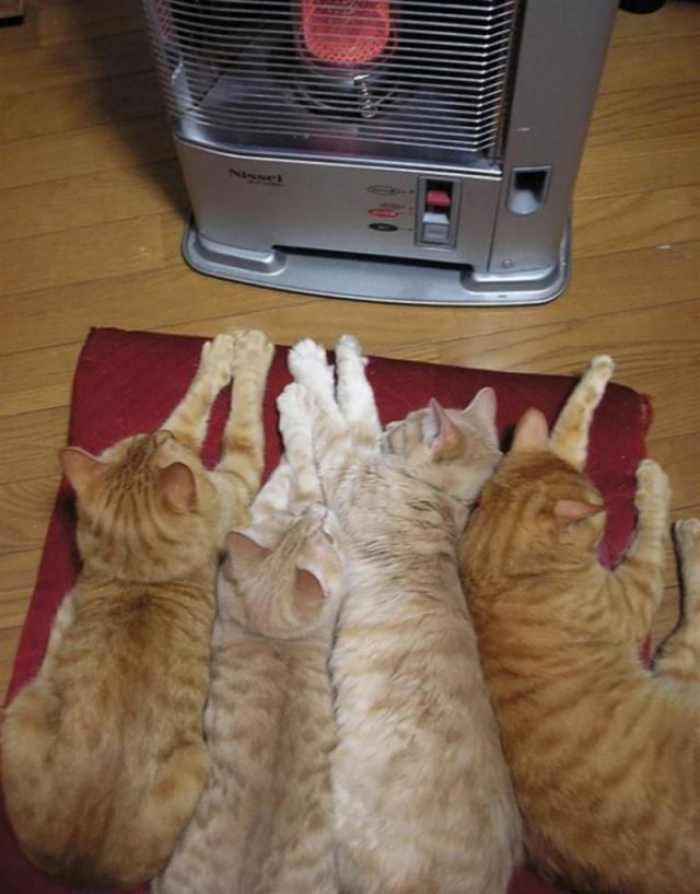 Забавные кошки, которые обожают тепло