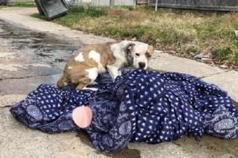 Собака которую бросили хозяева не хотела расставаться со своим любимым одеялом
