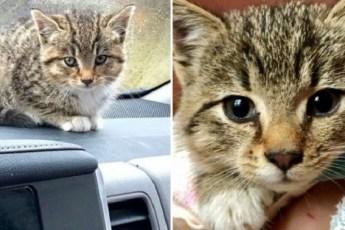 Промокший котенок сидел на парковке и плакал, пока его не заметила добрая женщина