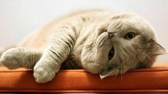 Кот и хозяин: как коты выражают свою любовь