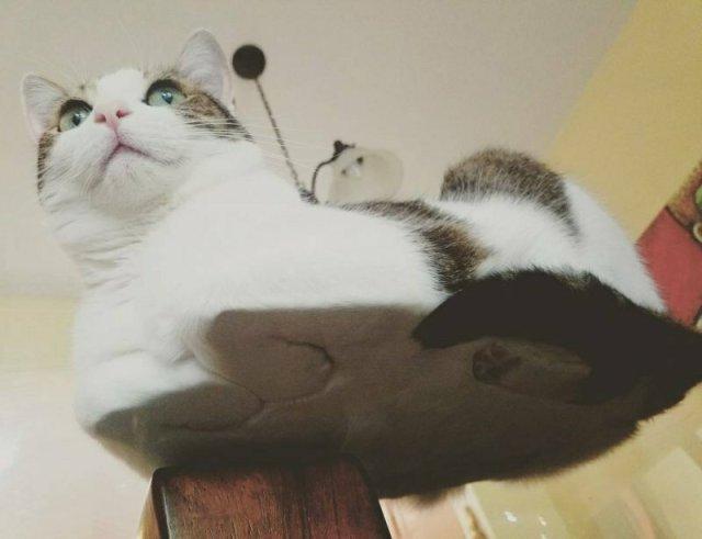 Вид снизу на пушистых, мягких котиков