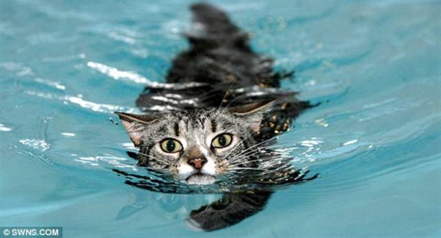 Невезучий парализованный кот научился ходить благодаря плаванию