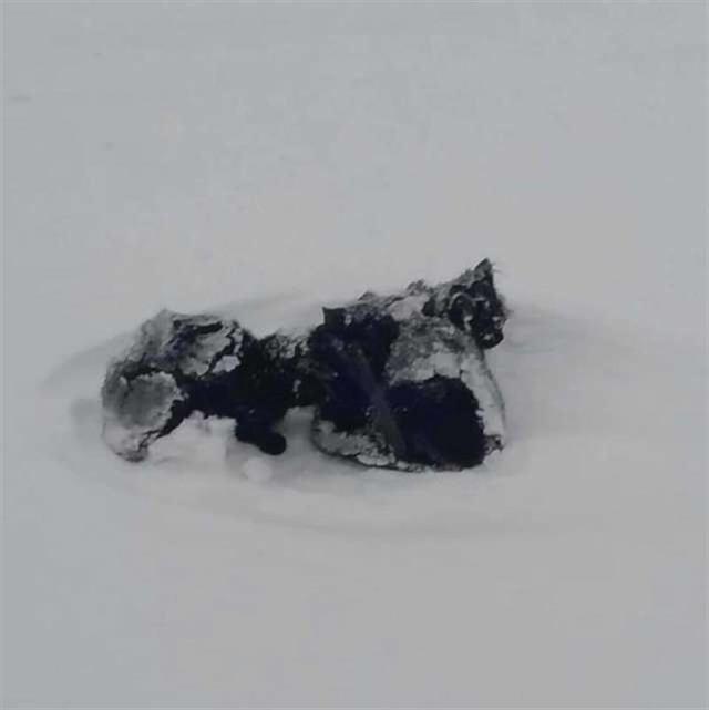 Черная «тряпочка» виднелась в сугробе. Подойдя ближе, человек увидел трех замерзающих котят