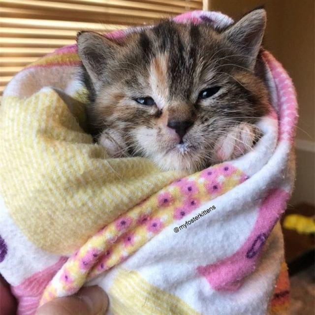 Трехнедельный котенок блуждал по городу, пока не встретил доброго человека