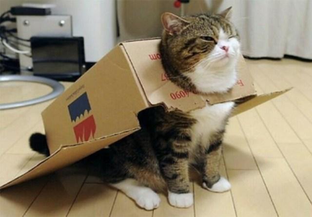 Коты, которые с гордостью хвастаются своими умениями