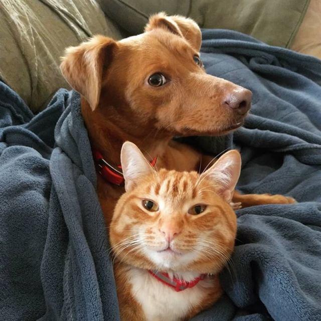 Женщина проверила, что делают кот и собака, когда её нет дома. Она сняла милое видео тайной дружбы