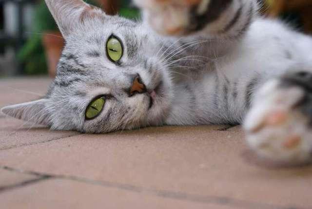 Странные привычки домашних животных и их научные объяснения