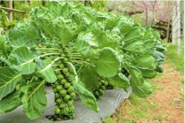 Посмотрите как удивительно выглядят продукты пока они еще растут