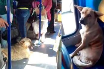 Водитель пустил песика погреться в автобус, его поведение удивило пассажиров