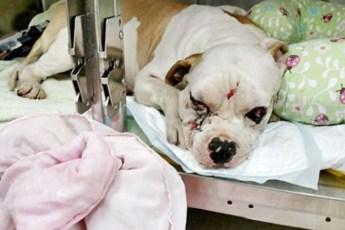 Хозяева узнав о уродстве собаки, хозяева отказались он нее и бросили в больнице