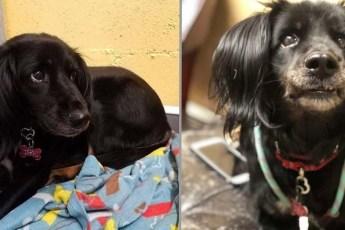 Разбитое сердце. После трех лет жизни в приюте собака поникла и потеряла надежду