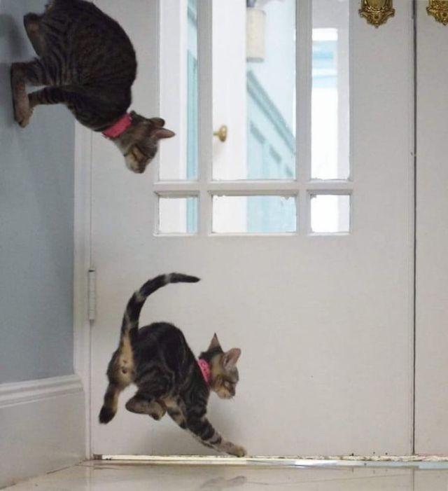 Забавные фото с животными, попавшими в кадр в удачный момент
