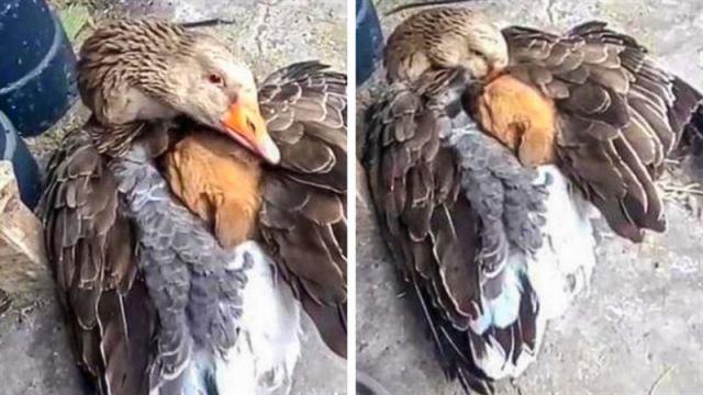 Счастливые животные-родители, гордые за своё потомство