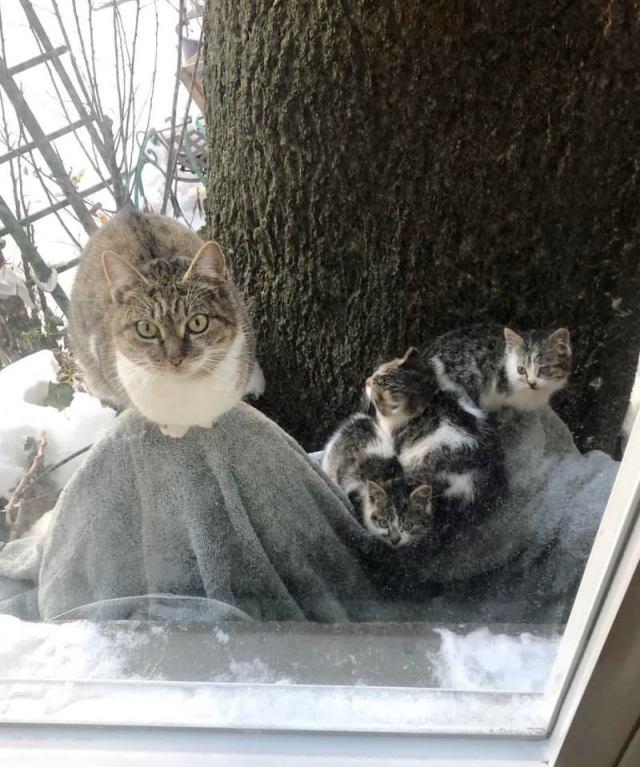Пара из Нью-Йорка спасла в мороз двух котят, а через год и их маму