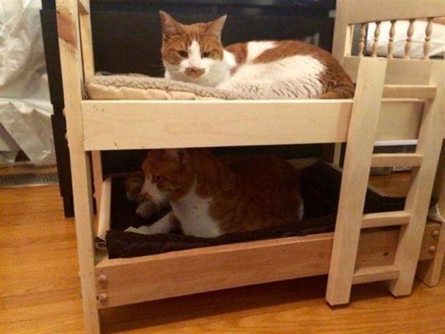 Когда-то они считали, что не переносят кошек...