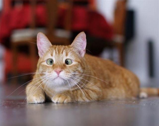 Кошки всегда очаровательны, чтобы с ними не случилось