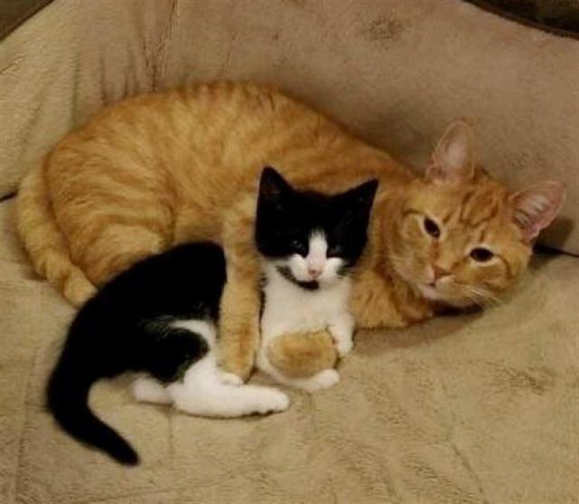 Мужчина спас котенка и хотел отдать его другим людям, но его кот решил иначе