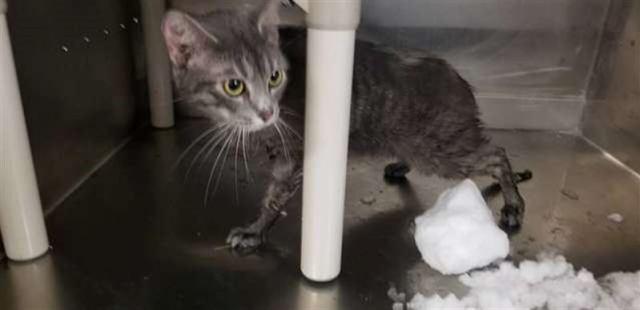 Спасли кошку, брошенную в переноске на улице и заваленную снегом