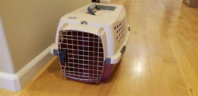 Супруги взяли котенка из приюта, а в переноске они обнаружили сюрприз
