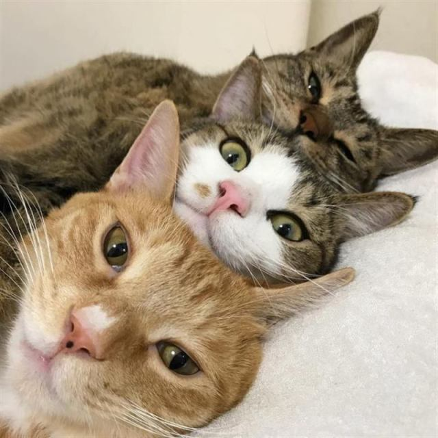 Котики это неисчерпаемый источник позитива