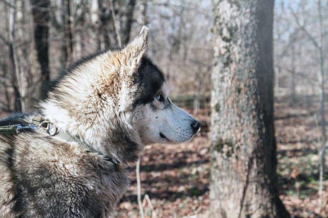 Собака удивительной красоты сама пришла проситься в приют