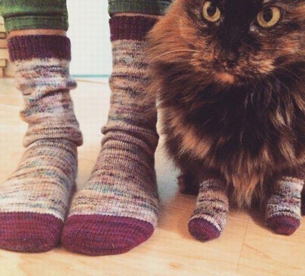 Веселые кошачьи привычка воплощенные в забавных фотографиях