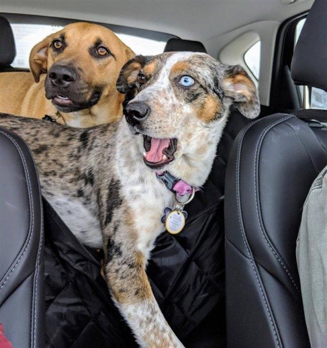 Фото веселых животных, которые заряжают позитивом
