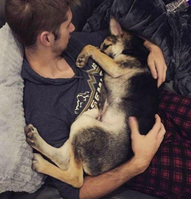 Облезлый породистый пес привлекал к себе внимание прохожих, как мог