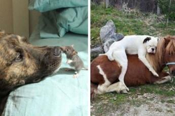 Любая дружба возможна в природе