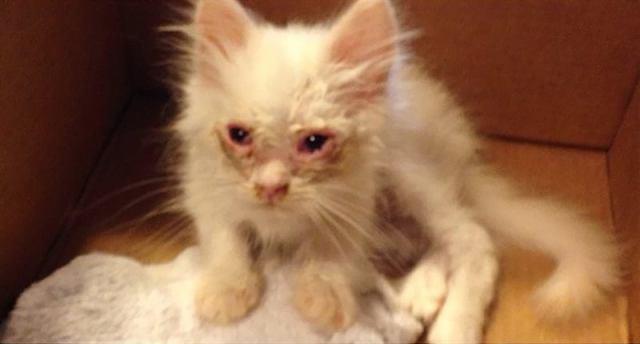 Пара подобрала с улицы жуткого кота, но никто и представить не мог кем он вырастет