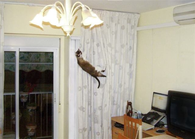 Коты-шкодники, которых застали на горячем