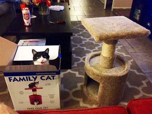 Кошки использующие подарки хозяев по своему