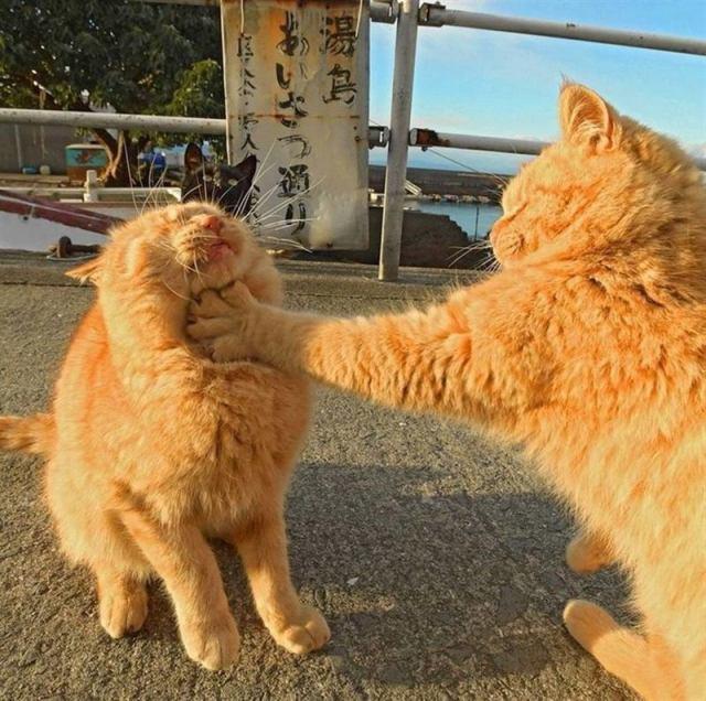 Просто смешные фото веселых котиков