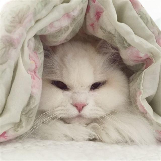 Пара подобрала с улицы грустного котенка, а он вырос в большого и пушистого кота