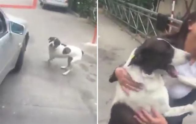 Грузин три года искал пропавшую собаку, а когда наконец нашел, пес прыгал и скулил от радости