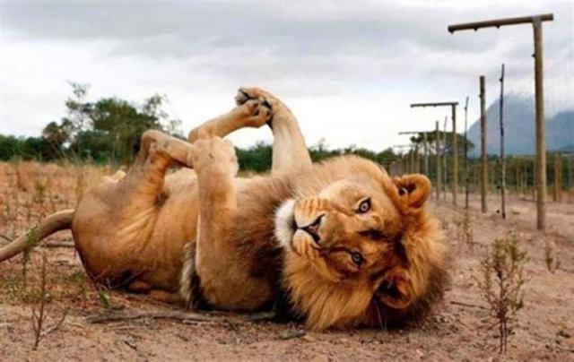 Они покажут как надо, невероятно фотогеничные животные, которые умеют позировать