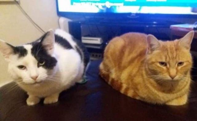 После переезда в новый дом семья обнаружила на пороге настойчивого уличного кота