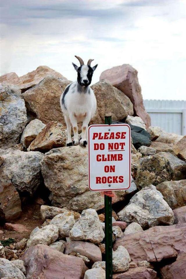 Животные, не признающие чужих авторитетов и правил