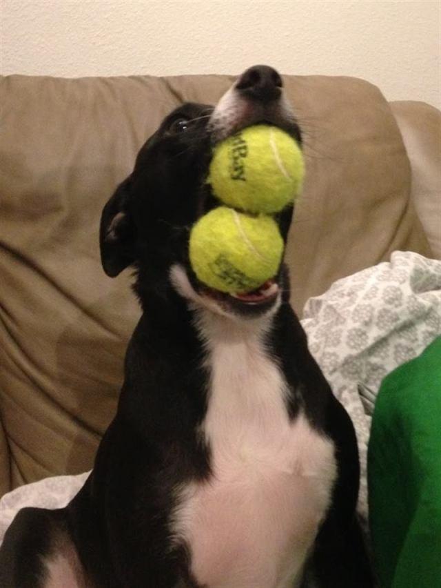 Чудаковатые собаки, которые смешат всех вокруг